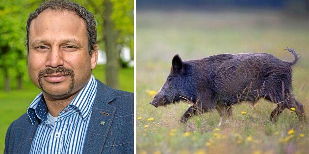 LRF och Vätternrundan serverar vildsvin och närproducerat