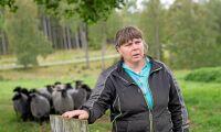Efter attackerna – fårägare håller rovdjursvaka