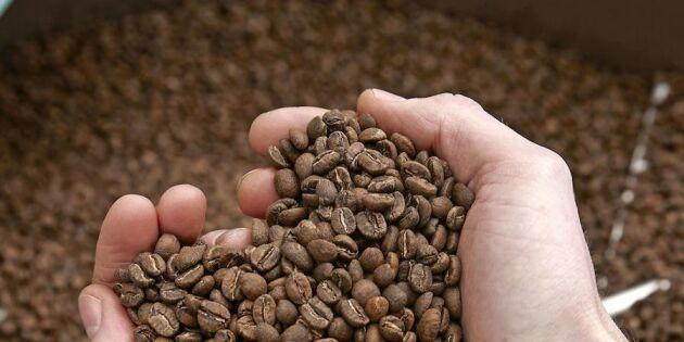 Så brygger du det godaste kaffet
