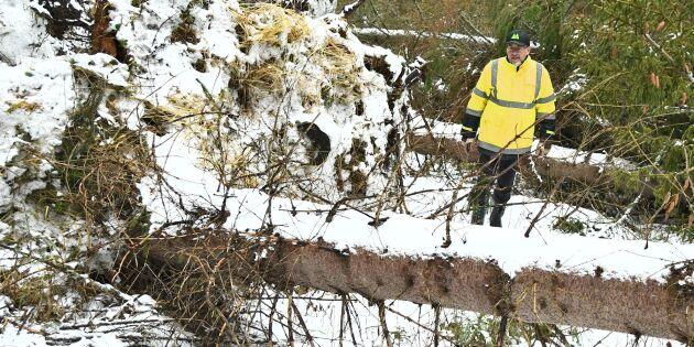 Farlig skogsröjning i stormens spår