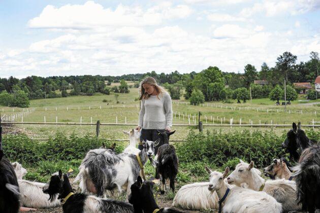 Charmigare djur finns inte, tycker Kajsa Söderbäck som på bara några år byggt och startat ett getgårdsmejeri.