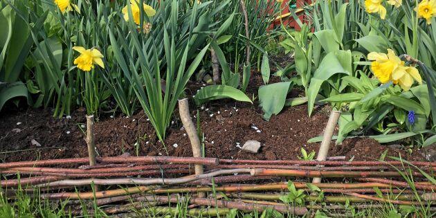 Bygg staket och stöd av pinnar och sly från trädgården