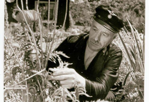 Banvaktare Larsson i Floby pysslar med vallmon i trädgården vid banvaktsstugan. Året är 1937.