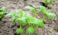 Potatisodlare vann miljonstrid –igen