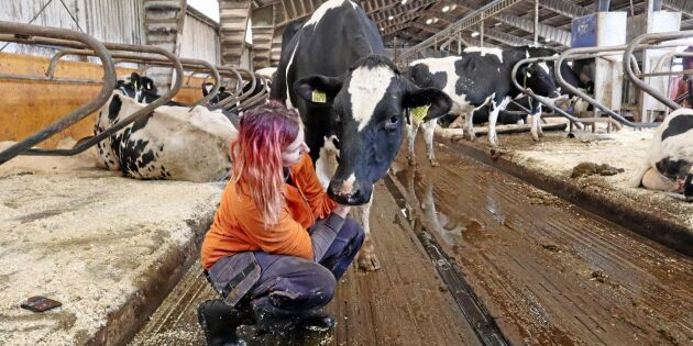 Så ska Lina bli den perfekta mjölkbonden