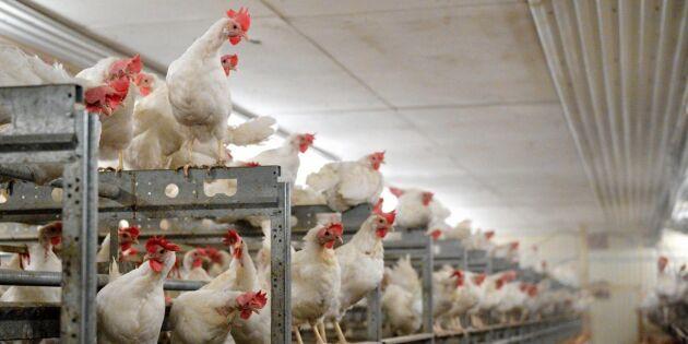 Prisras hotar slå ut äggproducenter