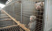 Djurskyddslagen kräver uppföljning anser politiker