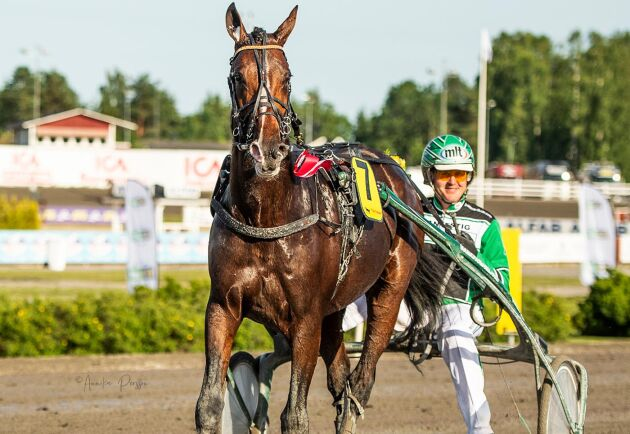 Jörgen Westholm med hästen Easy Cash.