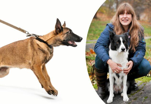 """Carinas Perssons specialitet är hundar med problembeteenden. Hon lär dig konsten att träna bort några av de vanligaste. Här visar hon övningen """"ryggsäcken""""."""