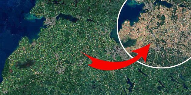 Se dystra rymdbilderna: Så ser Sverige ut efter torkan