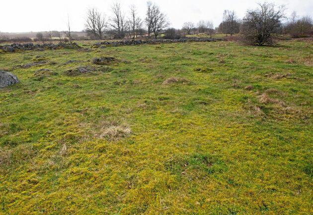 Betesmark som inte gödslas men heller inte har något större fodervärde för djuren.
