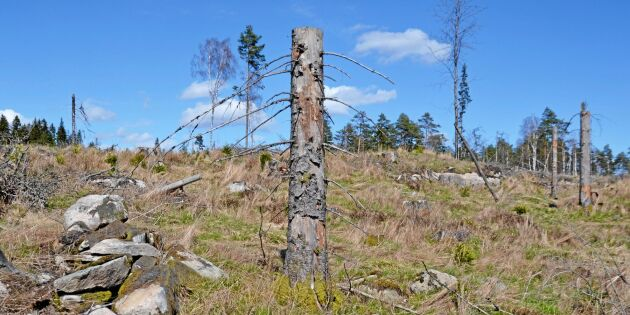 Rekordfå skador på kulturlämningar i skogen