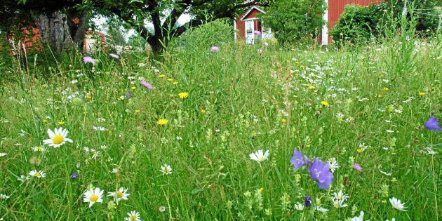Gör om gräsmattan: Vackrare, mer lättskött och bättre för miljön