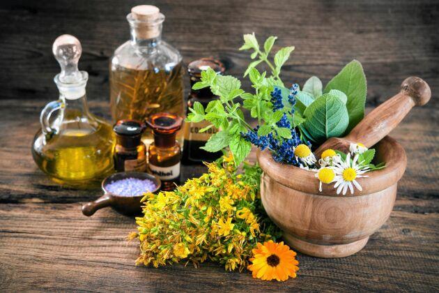 Medicinalväxter fanns förr på apoteken, men har i dag trängts ut av moderna läkemedel.
