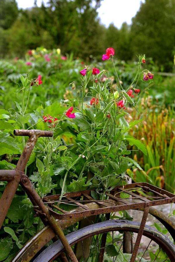 Spaljén av gamla skrotcyklar skapar en fin avgränsning i köksträdgården.