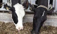 Mer betalt för GMO-fri mjölk