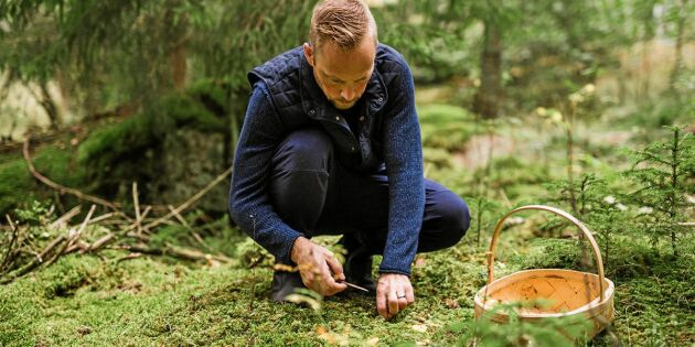 Vett & etikett: Så uppför du dig i kantarellskogen