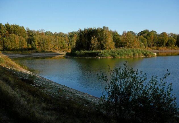 En av två dammar som förser bröderna Olssons lantbruk med vatten.