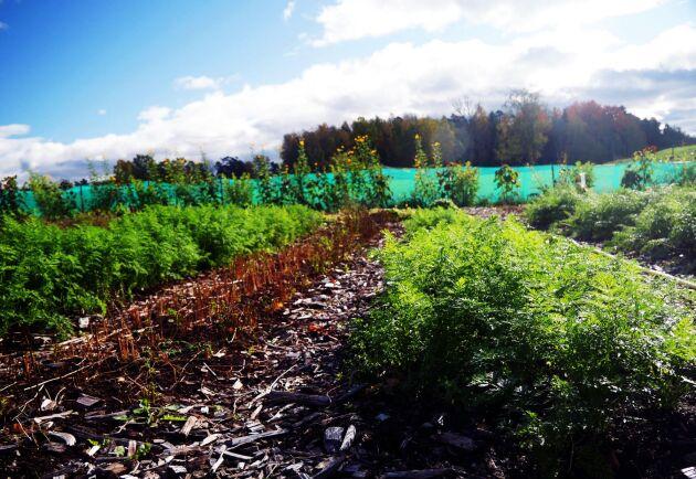 Grejen med ett andelsjordbruk är att ha ett varierat utbud. Här odlas omkring 50 olika grönsaker varje säsong, bland annat kål, spenat, selleri, bönor, betor, morötter - och mycket mer.