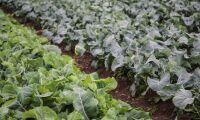 EU-kommissionen: Inga patent på konventionellt förädlade grödor