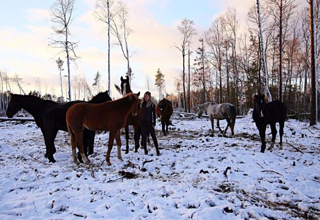 Stall Axgården är Ålands enda stuteri som föder upp ridhästar, welsh cob och SWB (svenska halvblod) och säljer hästar i Sverige, Norge och Danmark. På gården står bland annat SWB-hingsten Ronaldhino. Unghästarna och avelsstona går tillsammans i stora hagar på lösdrift.