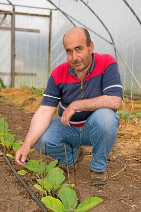 Aubergine - ny gröda för Torfolk gård, odlad av Abdul Hakim Hamsho