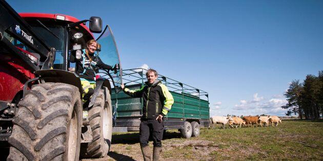 Ständig jakt på naturbeten ger viktigt tillskott för spjutspetskandidaten Alstrums gård