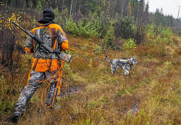 Nu under älgjakten rör sig många jägare med vapen i skog och mark. Men det finns plats även för svampplockare. Ingen behöver stanna hemma.