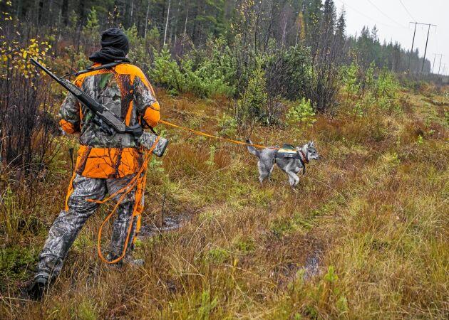 Vett & etikett! Det här gäller i skogen under jaktsäsongen