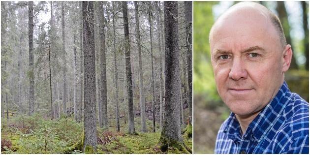 LRF Skogsägarna: Skog för 30 miljarder kan bli värdelös