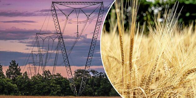 Här är produkterna som blir dyrare i torkans spår