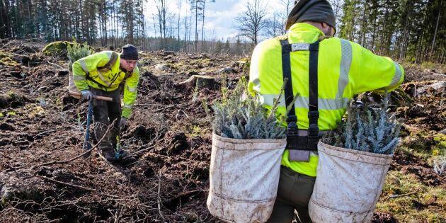 """Deras skogsplantering är """"historiskt tidig"""""""