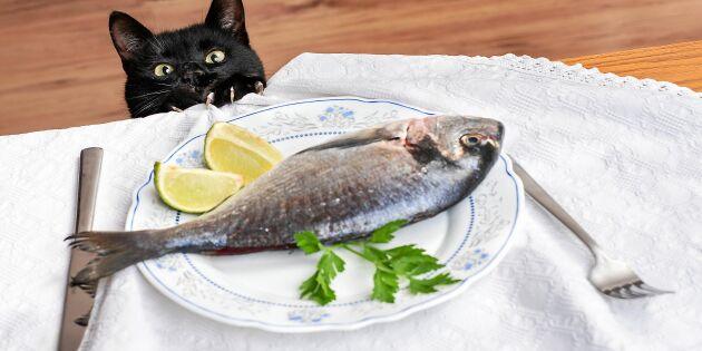 Därför kan fisk vara skadligt för din katt!