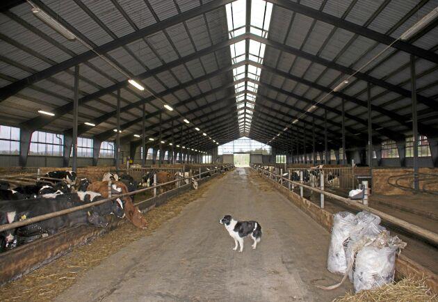 Stallet med 600 platser byggdes 2011.