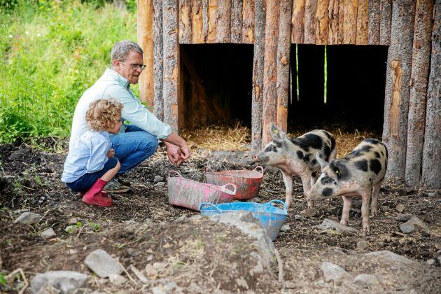 Emrik och pappa Lars hälsar på linderödsgrisarna i deras hage. I framtiden hoppas Lars på att bli självförsörjande på kött.