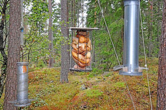 Rolf Olsson utfodrar fåglar med frön och bröd från en livsmedelsbutik i Åmål.