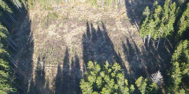 Mellanskog utreder oklara avverkningsanmälningar