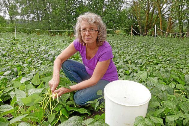 Eva Insulander plockar vaxbönor på egna gården utanför Boxholm. Vaxbönor, rättika och smågurkor odlar man fortfarande själva på friland.