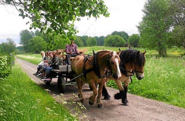 Populära turer med häst och vagn på sommaren och med släde på vintern.