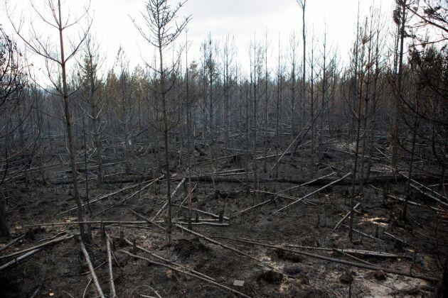 Skogsbranden i Västmanland sommaren 2014 blev en möjlighet för forskning om allt från vad frivilligarbetet betyder för drabbade och invånare till skogsbrändernas beteenden och om hur landskapet återhämtar sig efteråt.