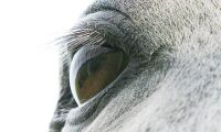 Akut sjukdom orsak till hästs död