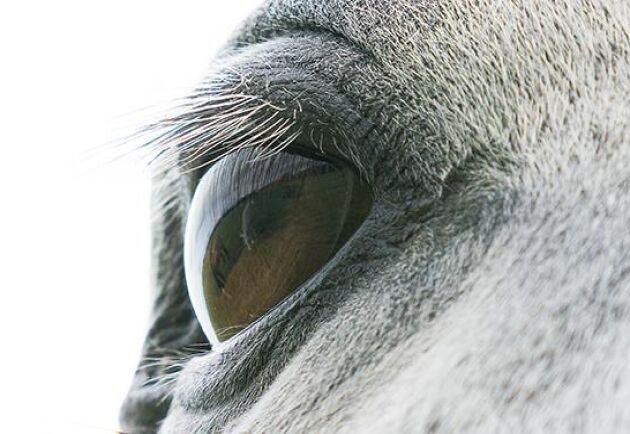 Det var ingen mänsklig hand bakom hästens död utan ett akut tarmvred enligt obduktionen. Arkivbild.
