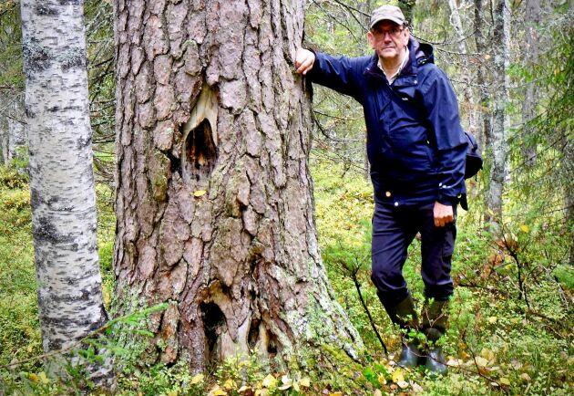 Skogskonsulenten Per- Arne Malmberg på Skogsstyrelsen i Kalix.