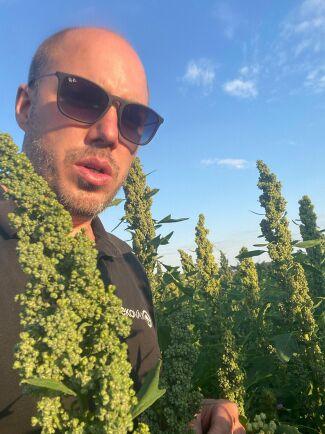 Emil Olsson i grödan quinoa.