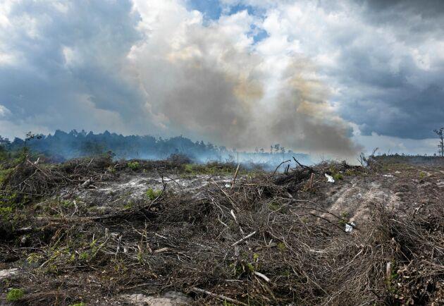 Skövlad regnskog i Indonesien till följd av till exempel utvinnandet av palmolja.