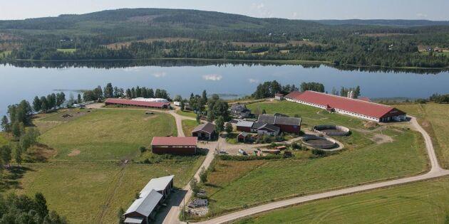Storskalig mjölkgård till salu – igen