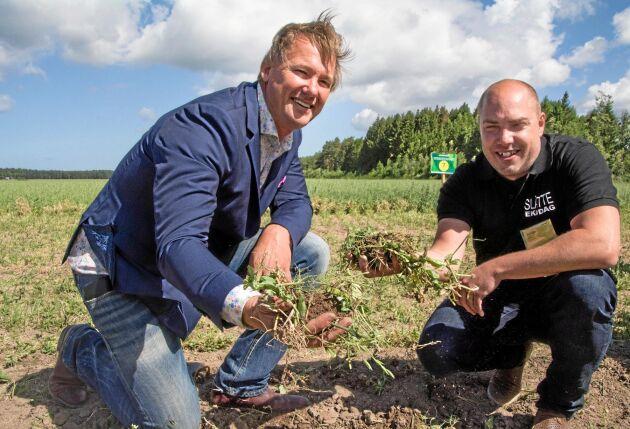 PÅ JAKT EFTER MULL. Om tio år ska Olle Ryegård och Emil Olsson ha ökat mullhalten i ett av demofälten på Slätte gård från dagens 2,8 till 6 procent. Verktygen är framför allt mellangrödor och näringsbalansering.