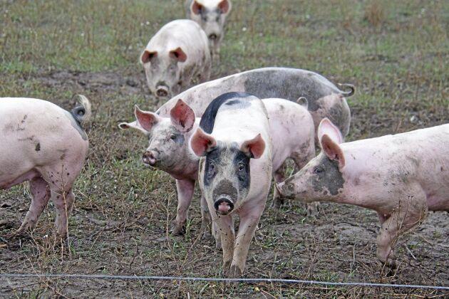 Tidigare hade Edsbergs gård ett stall Krav och ett stall EU-ekologiskt, nu är det Krav som gäller för hela slanten.
