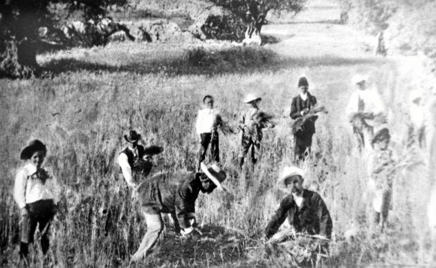 Under slavliknande förhållanden fick de svenska bönderna slita för sekten i Jerusalem.