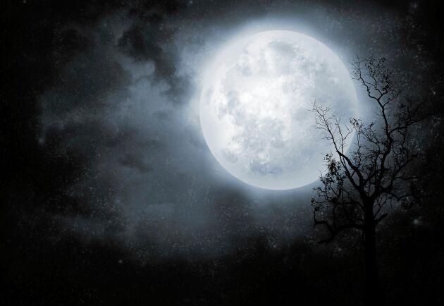 Vacker men inte magisk menar forskarna om fullmånen.